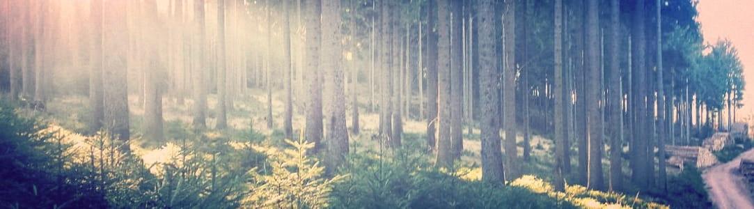 Pension Oberhof - Thüringer Wald